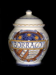 borrago---17cm