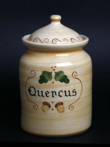 quercus--18cm